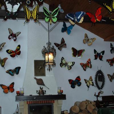 Artistes: Maison des papillons