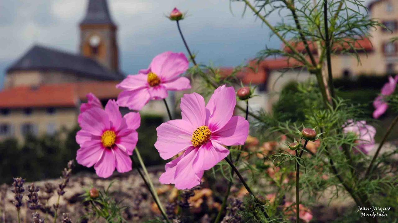 Fleurs du village