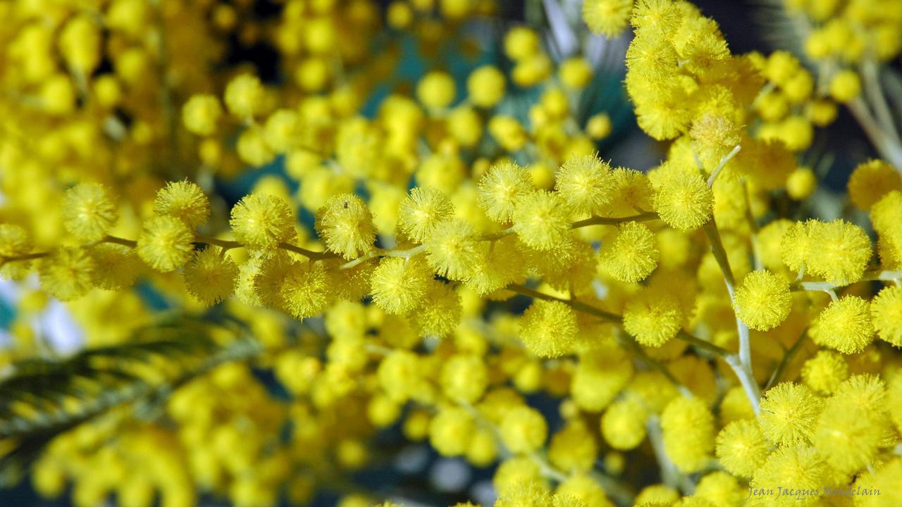 Annonce de printemps