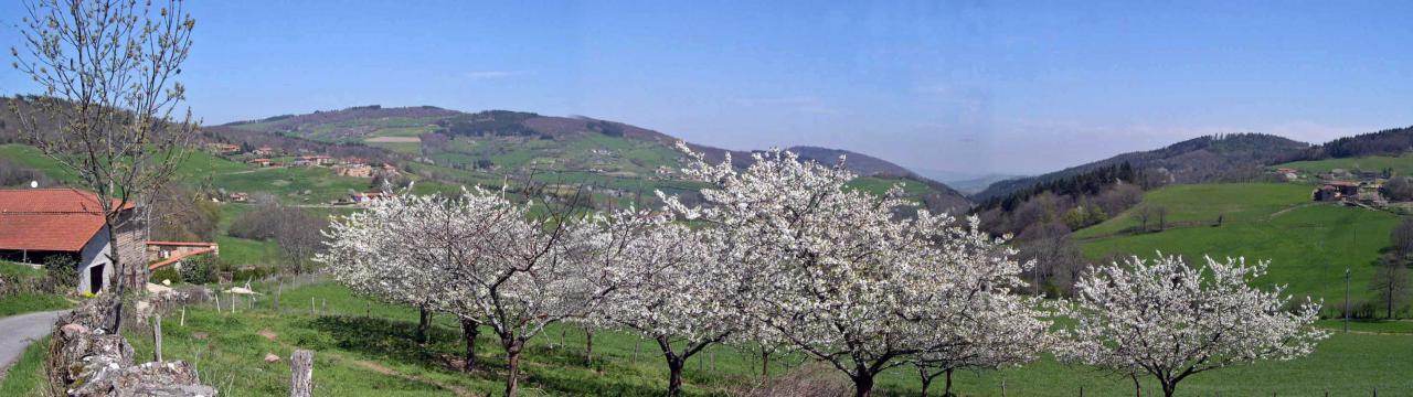 La maison, les cerisiers , les Monts du Lyonnais au printemps